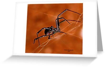 Electric Orange Slide    ( Black Widow Series) by Carla Jensen