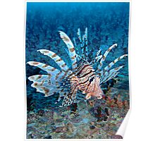 Lionfish Poster