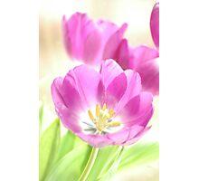 Spring Tulip Still Life Photographic Print