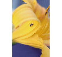 LIly and the Little Spider Photographic Print