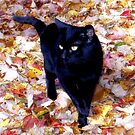 Smudge in the Leaves by Megan Noble