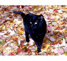 Smudge in the Leaves Photographic Print