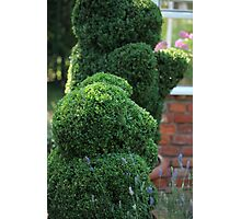 green bear topiary Photographic Print