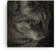 Boo the cat... Canvas Print