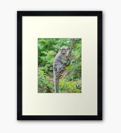 Monkey - Bal Framed Print