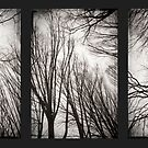 treeology in black&white by Dorit Fuhg