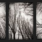 treeology in black&white by Dorit