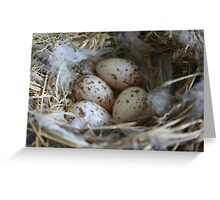 Nest of eggs Greeting Card
