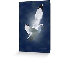 White Gull Greeting Card