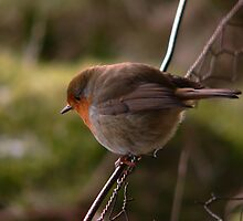 Bird on a wire by Douglas Robertson