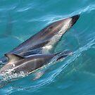 Dusky Dolphins by Gina Ruttle  (Whalegeek)