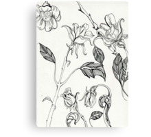 botanical floral line drawing black and white Canvas Print