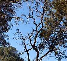 A tree in autumn outlined against a clear blue sky by ashishagarwal74
