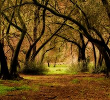 Mystic Forest by socalgirl