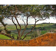 Tree at Saqqajja Steps, Malta Photographic Print