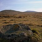 Dartmoor: Abandoned Millstone on Row Tor by Rob Parsons