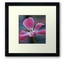 Pink And Playful Framed Print