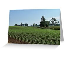 Green Fields Forever Greeting Card