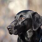 My Dog, Emma is a Black Lab. by Brian Dodd