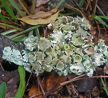 Lichen on Dead Branch Outer Banks North Carolina USA by MotherNature2