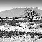 Alamogordo by Greg Riegler
