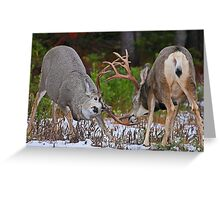 Mule Deer Buck Fight 4 Greeting Card