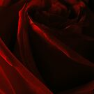 My Love Is Deep As A Red Red Rose by CinB