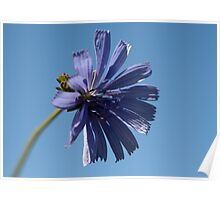~Chicory~ Poster