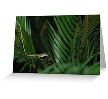Green Anole, Green Sego Greeting Card