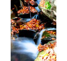 Fall Leaves and Cascades Photographic Print