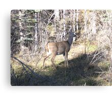 Wide Eyed Doe Canvas Print