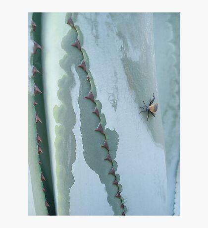 Century Plant and Stinkbug Photographic Print