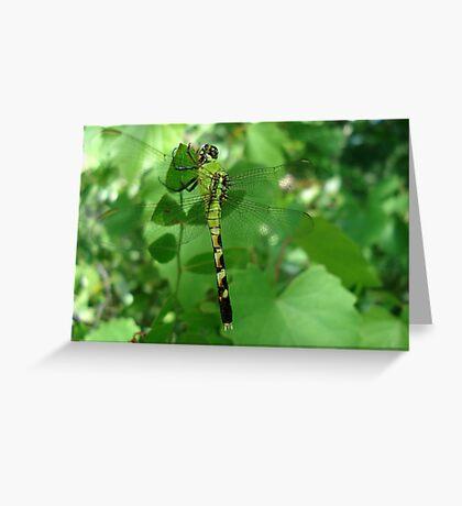 Pondhawk - Dragonfly Greeting Card