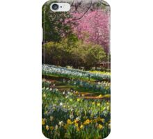 Daffodils at the Farm iPhone Case/Skin