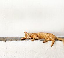 one lazy cat by Raymond Capozzi