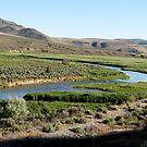 Oregon Wilderness.  by trueblvr