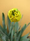 ~Anticipating Spring~ by NatureGreeting Cards ©ccwri
