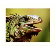 The Iguana Art Print