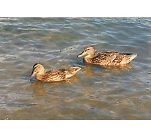 Ducks in Pond Photographic Print