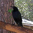 Black Bird by MichelleR
