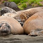 Lazing with Friends by Phill Danze