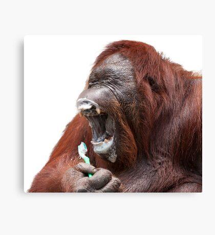 Orangutan Oral Hygiene 01 Canvas Print