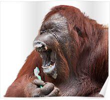 Orangutan Oral Hygiene 01 Poster