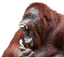 Orangutan Oral Hygiene 01 Photographic Print