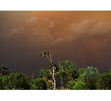 Black Saturday Sky Photographic Print