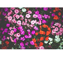 Floral Daydream  Photographic Print