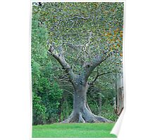 The Fig Tree Poster