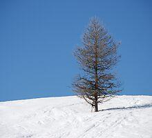 ARBRE ciel bleu ,Three,blue sky by yugh