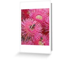Aren't we Pretty in Pink? Greeting Card