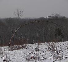 Snow Burden by budrfli